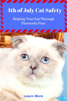 4th of July is when the most pets go missing. In this post, we provide tips to keep your cat safe so they won't become a holiday statistic