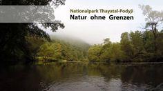 """Der neueste NP Thayatal Film """"25 Jahre Natur ohne Grenzen"""" gibt einen Einblick in die grenzübergreifende und völkerverbindende Naturschutzarbeit an der österreichisch-tschechischen Grenze. Movie, National Forest, Nature"""