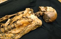 """Beautiful tattoos on the 25000 year old Siberian mummy of a woman called the """"Altai Princess"""""""
