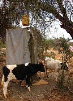 [Massai Gemeinschaft]: Wer darf heute zuerst unter die Dusche? SOCIALTOURIST - Urlaub mit sozialer Verantwortung - Kenia - Kenya