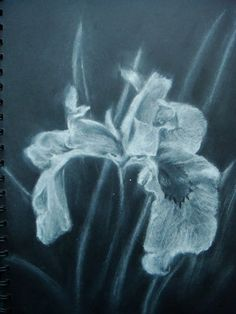 Original chalk and charcoal