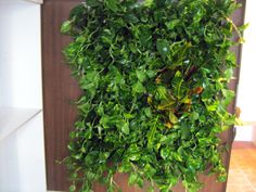 Green Walls @ Cabinet de Avocatura Green Walls, Herbs, Outdoor Structures, Cabinet, Clothes Stand, Closet, Herb, Cupboard, Spice