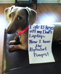 An epic gallery of 30 best dog shaming pictures that prove these dogs are the naughtiest in the world. The best dog shaming photo gallery that features the most hilarious, most shameful, and never-before-seen puppy misdeeds. Funny Animal Pictures, Funny Animals, Cute Animals, I Love Dogs, Cute Dogs, Cute Babies, Dog Shaming Photos, Cat Shaming, Public Shaming