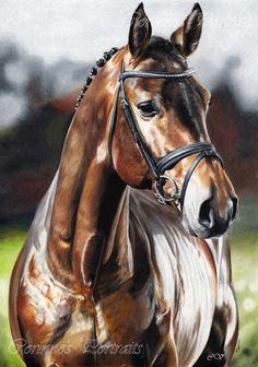 Cheval/Horse by Sadness40.deviantart.com on @deviantART