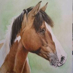 Porträtt i akvarell. A3 format   Watercolor   #akvarell #häst #skäck #porträtt #konst #watercolor #painting #horse #portrait #fineart