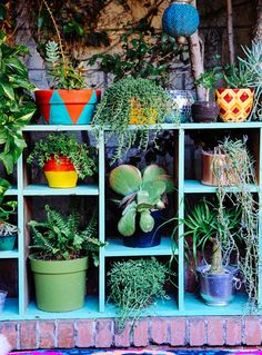 Colourful garden with succulents, DIY closet