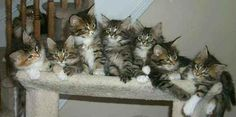 so many kittens!