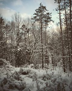 Channel, Messages, Bear, Feelings, Nature, Youtube, Outdoor, Instagram, Outdoors