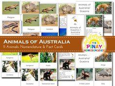 Animals of Australia / Oceania