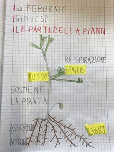 Esseri viventi e non viventi, classe prima – Maestra Mihaela Back To School, Bullet Journal, Teacher, Botany, 3, Mary, Album, Ideas, Alphabet