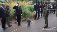 Knighted Penguin at the Edinburgh Zoo Is Promoted to Brigadier by the Royal Guard of Norway