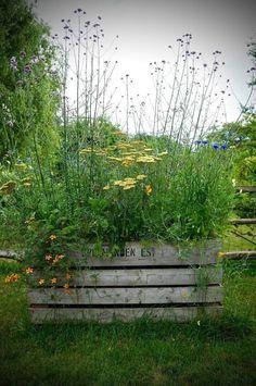 How to Create a Mini Meadow DIY - garden types Meadow Garden, Garden Cottage, Prairie Garden, Back Gardens, Outdoor Gardens, Amazing Gardens, Beautiful Gardens, Wild Flower Meadow, Wild Flowers
