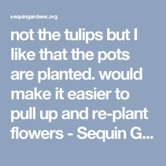 not the tulips but I like that the pots are planted. would make it easier to pull up and re-plant flowers - Sequin Gardens