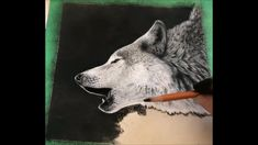 Working on the final stages of completing this howling wolf using soft pastels on UArt sanded paper. Here I show how I careful work around the subject to add the background. Wildlife Paintings, Animal Paintings, Painting & Drawing, Watercolor Paintings, North American Animals, Soft Pastels, Graphite Drawings, Wolf Howling, Pet Portraits