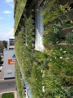 Die Fassade Des Boutique Hotel Stadthalle Wien. Forschungsprojekt Der Firma  Grünwand Und Der Universität · Green WallsGreen ...
