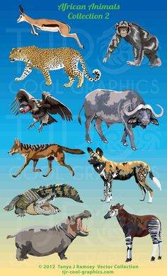 African Animals Collection 2  Clip Art by CleverVectors on Etsy