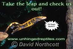 Super Gecko Leap