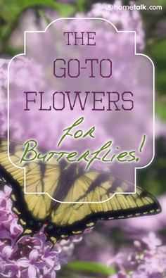 The {Go-To Flowers} for Butterflies!