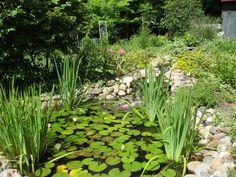 Pond- Nancy Smolarek