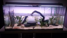 Our Axolotl Aquarium Resort