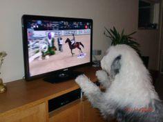 tv kijken