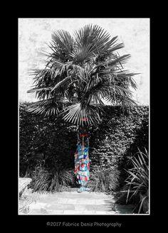 https://flic.kr/p/Wiu4te | Projet 365-2017-185 - Palmier en salopette | La Rochelle - Le Jardin des Plantes