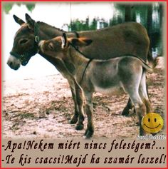 She loves him, well he is hung like a donkey ‼️❤️ Easily Offended, What You See, Donkey, Love Him, Lol, Funny, Animals, Humor, Animales