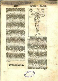 Mandragora, 1490-1495, Pietro de Crescenzi, Ruralia commoda, spira (Alemania), Spirae ; Petrus Drach, M-RJB, [De Mandragora], P.92