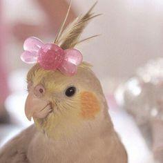 cockatiel with a bow Cute Animal Memes, Cute Memes, Cute Funny Animals, Cute Cats, Baby Animals Pictures, Cute Animal Pictures, Animals And Pets, Funny Birds, Cute Birds