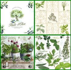 4 x Single Vintage Table Paper Napkins, for Decoupage, Lunch Herbs  Decopatch