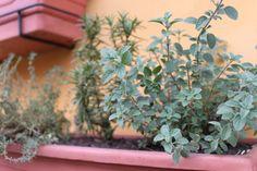Combinação que dá certo: orégano, alecrim e tomilho ©Sabor de Fazenda