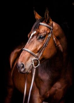 A beautiful horse mane talks! Everything you need is available … – Art Of Equitation All The Pretty Horses, Beautiful Horses, Animals Beautiful, Horse Mane, Bay Horse, Nature Animals, Animals And Pets, Cute Animals, Horse Photos