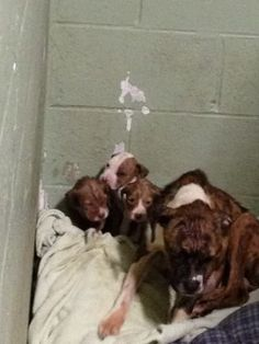 MEGA - URGENT - HORRY COUNTY STARVED MOM AND PUPPIES SET TO DIE!   Starved and abandoned in a crate outside by POS owners! They are in terrible shape and need OUT ASAP. Transport help provided! This family has 48 hours or the will no longer be on this planet!   Horry County Animal Care Center 1923 Industrial Park Road Conway, SC 29526 843.915.5172 Animal Shelter   https://www.facebook.com/photo.php?fbid=10100181225170549&set=a.10100181227326229&type=1&theater