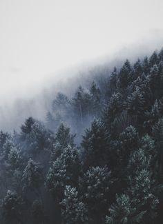 In Deutschland gibt es viele atemberaubende Wälder. Zum Beipspiel in der Sächsischen Schweiz.   Foto von Christian Grab