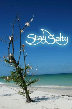 My company for people who love the saltwater culture ~ Facebook.com/staysalty