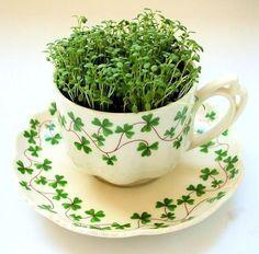Irish Teacup.