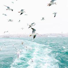 Bosphorus Bridge, Sea And Ocean, Istanbul, Sailing, Photo Wall, Around The Worlds, Scene, In This Moment, Beach