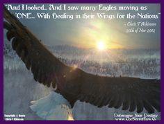eagles on pinterest eagles art prints and bald eagle