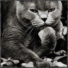 Andy Prokh (With images) Kocię, Koty, Ludzie