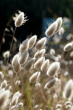 Buy 'Beach Grass' by Frank Moroni as a Greeting Card. Beach Grass, Seed Pods, Jolie Photo, Ornamental Grasses, Garden Landscaping, Planting Flowers, Flowers Garden, Flower Power, Wild Flowers
