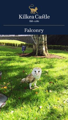 Falconry at Kilkea Castle offers a unique opportunity for guests of all ages to participate in an interactive demonstration featuring hawks, falcons, and owls.