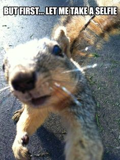 #photography #squirrel