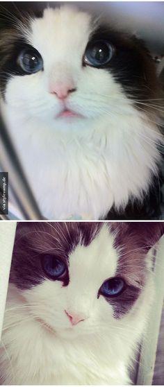 Die schönste Katze der Welt?