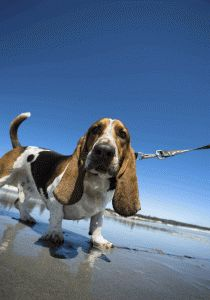 Dog Walks, Park Excursions, Pet Taxi: Waggy Tails has got you covered in Knoxville and Oak Ridge, Tennessee: www.waggytailsofknoxville.com