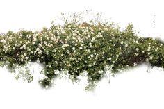 hedge photoshop brush - Szukaj w Google