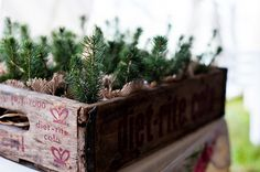 A box of small pine tree saplings wrapped in burlap with burgundy ribbon as wedding favors.