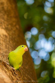 Green bird by Patrik Oening  on 500px