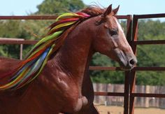 Dyed horse mane or extensions (can't tell which)