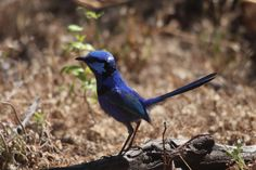 BLUE BIRD by Supaporn Mayhew on 500px