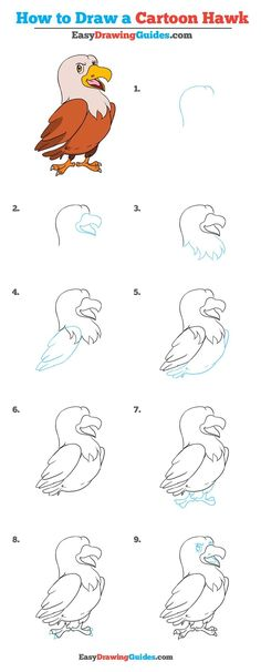 Learn How to Draw a Hawk: Easy Step-by-Step Drawing Tutorial for Kids and Beginners. #Hawk #drawingtutorial #easydrawing See the full tutorial at https://easydrawingguides.com/how-to-draw-a-cartoon-hawk-really-easy-drawing-tutorial/.